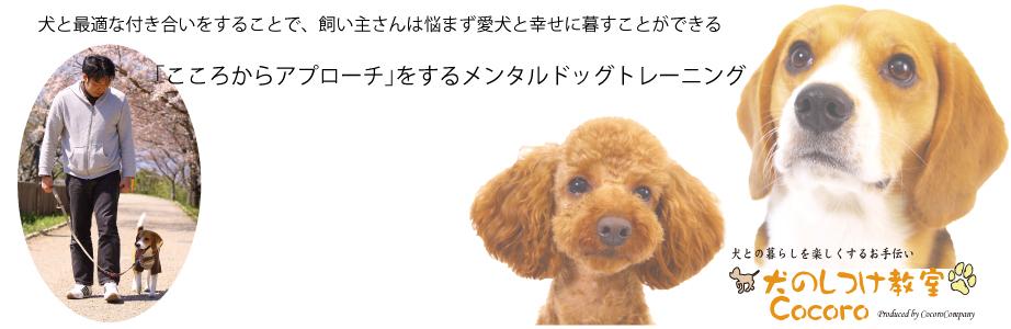 犬の躾ではなく人として犬との付き合い方ひとつで賢い犬に育てていくメンタルトレーニング。「無駄吠え」「噛む」「興奮」など問題行動も改善
